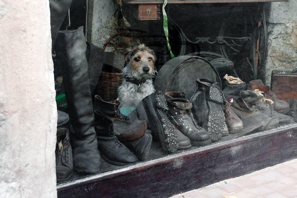 Le chien dans la vitrine
